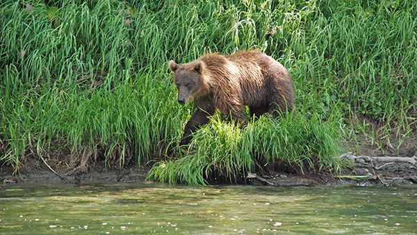 Медведей было жалко. Голодные, ждут рыбу, а рыбы еще нет