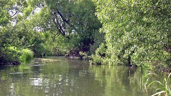 Река Шаха у деревни Елизарово