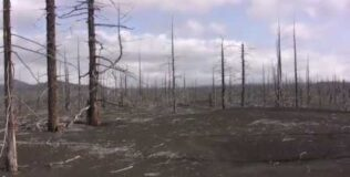 Камчатка. Мертвый лес